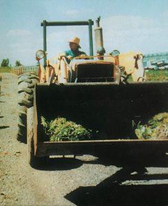 Eva on tractor